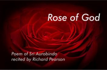 Rose of God