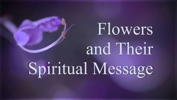 Flowers and Their Spiritual Message (1991) fr
