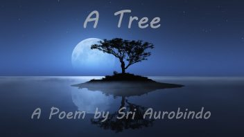 A tree - featured image & cover