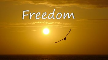 Freedom cover 1