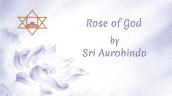 LP13 Rose of God