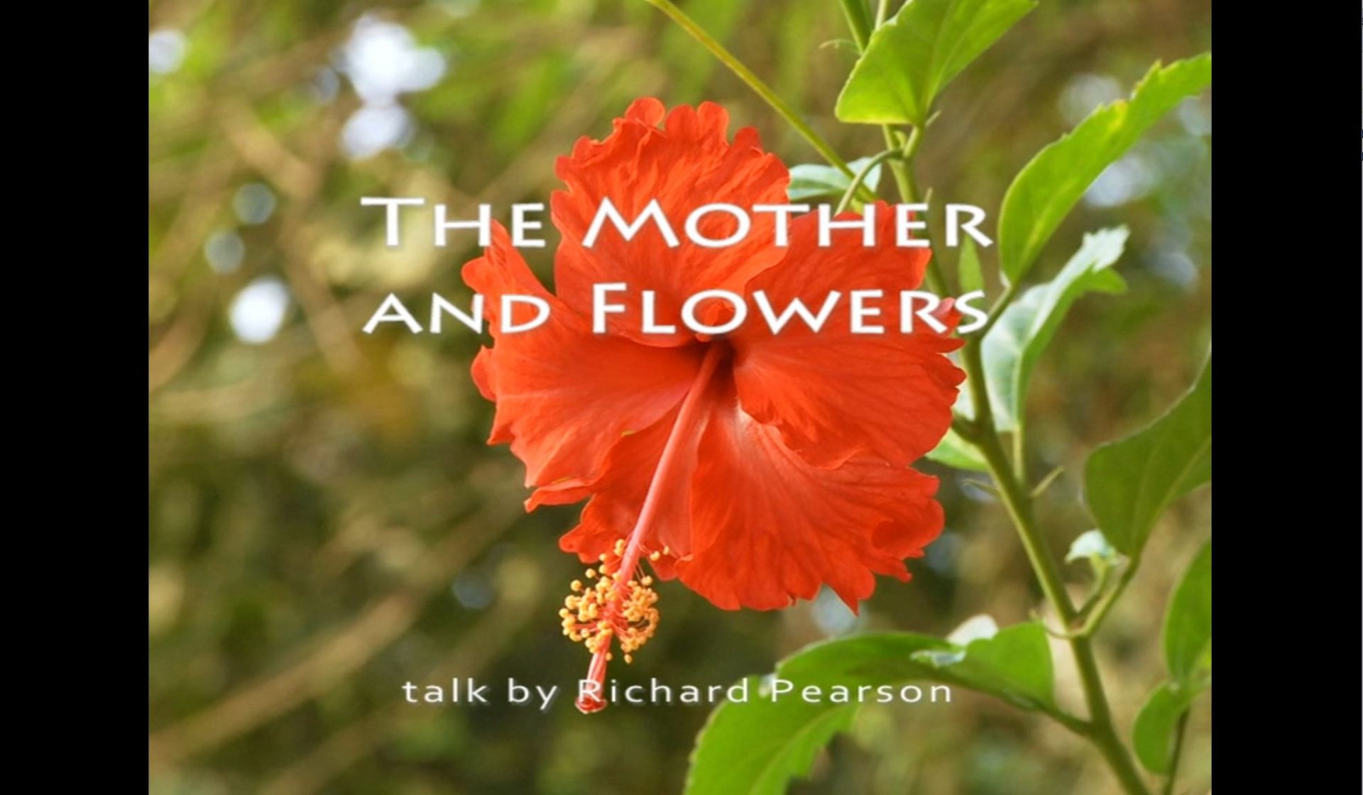 The Mother and Flowers