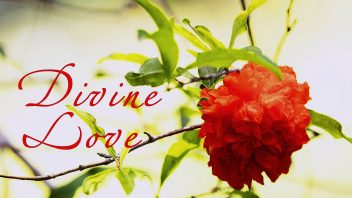 SMF Divine Love Pomegranate Eng cc3